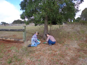 Marg and Ayaka treat small woody weeds